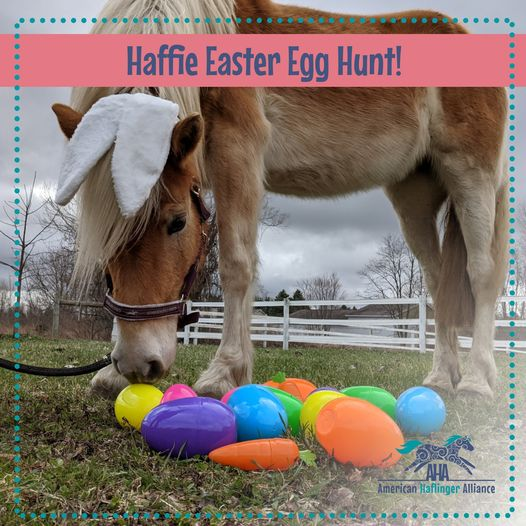 Haffie Easter Egg Hunt!